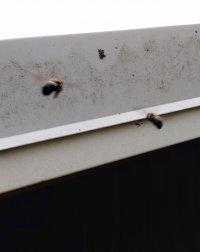I2 bees.jpg